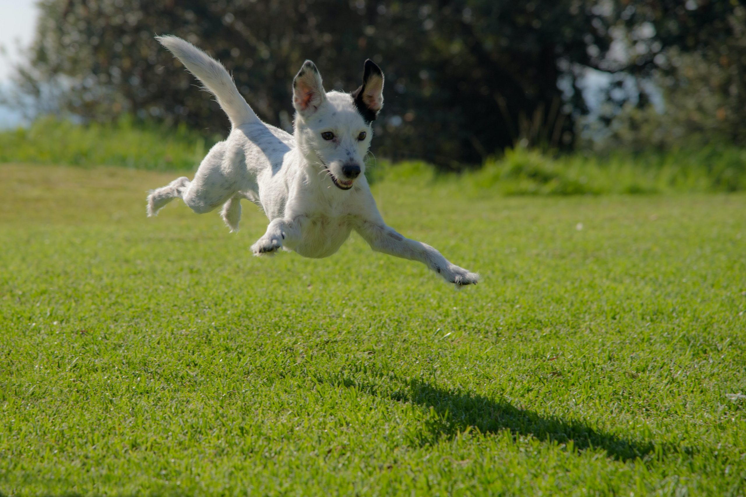 [Video] Teach your dog to jump!