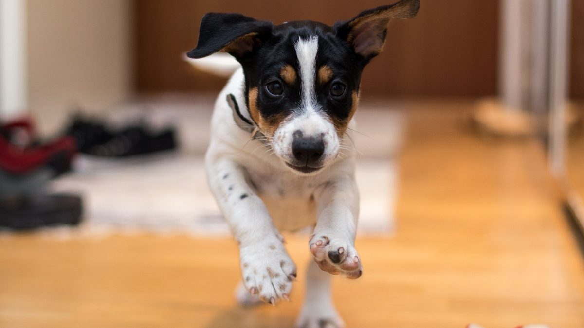 How to Train a 4-Month-Old Puppy