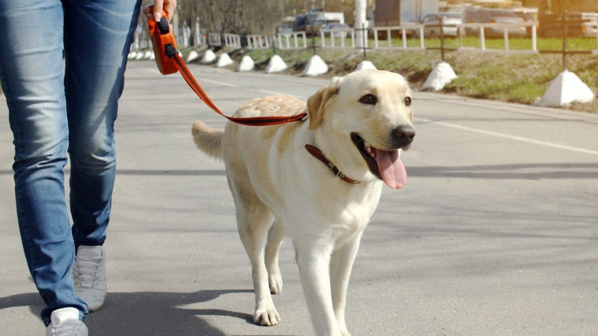The Prodigal Dog: How to retrieve a dog that has gotten off leash?