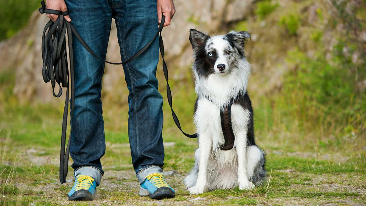 How to Train Your Dog – Essentials for Proper Training