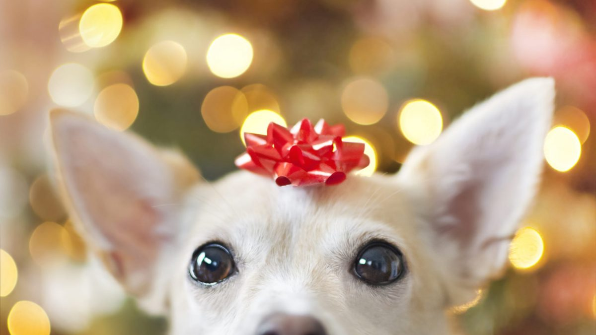 Keep Your Pets Safe During the Holidays: Things and Food to watch out for