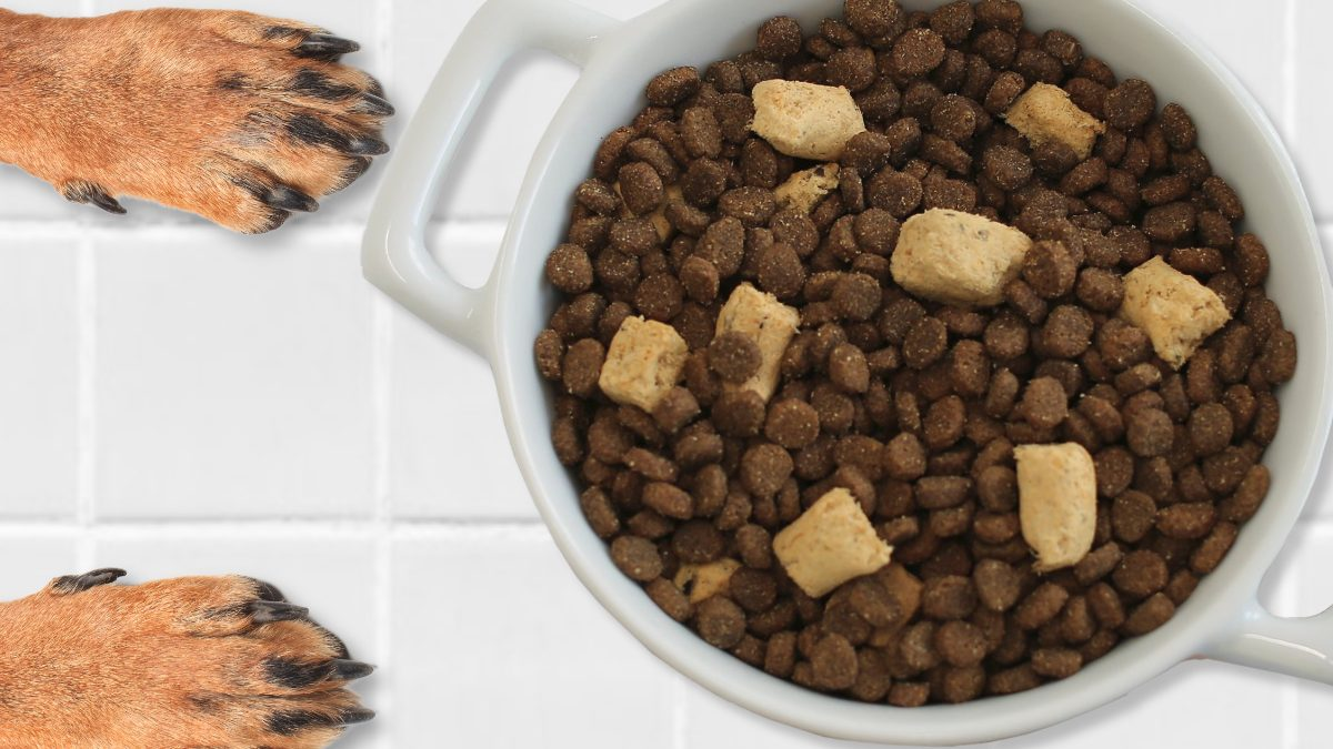 A New Kind of Snack for Pups: Freeze-Dried Dog Treats
