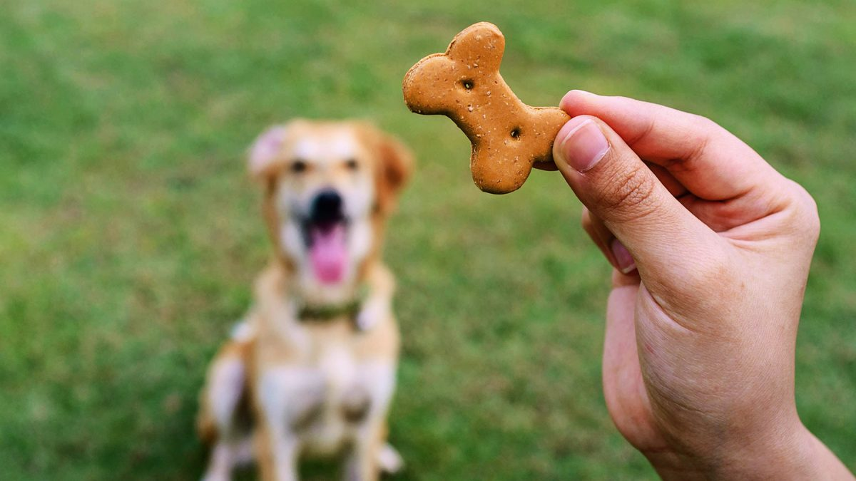 How to Use Dog Treats for Training