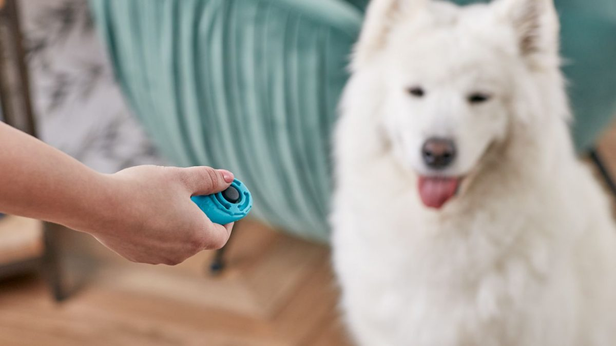 A Quick Guide to Clicker Training your Dog