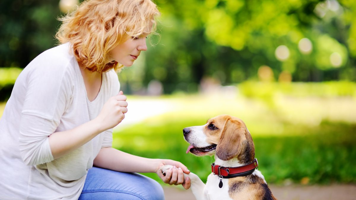 A Quick Guide to Positive Reinforcement