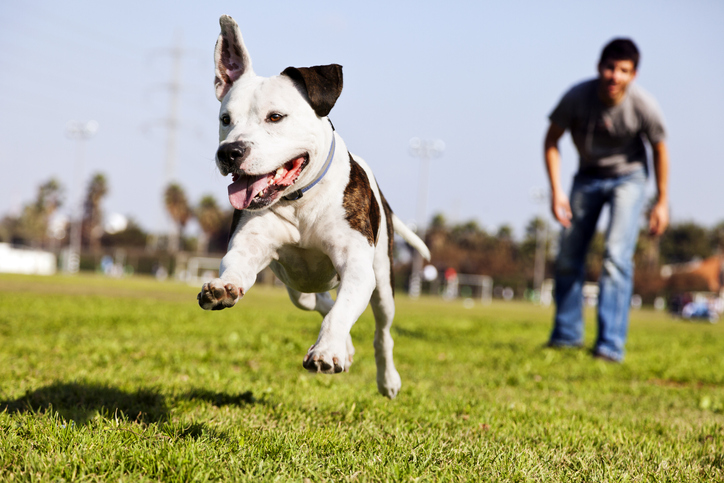 Effective Reliable Recall Tips: Training Your Dog to Come