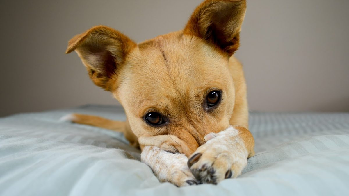 Aversive Dog Training and Why you Shouldn't Do it