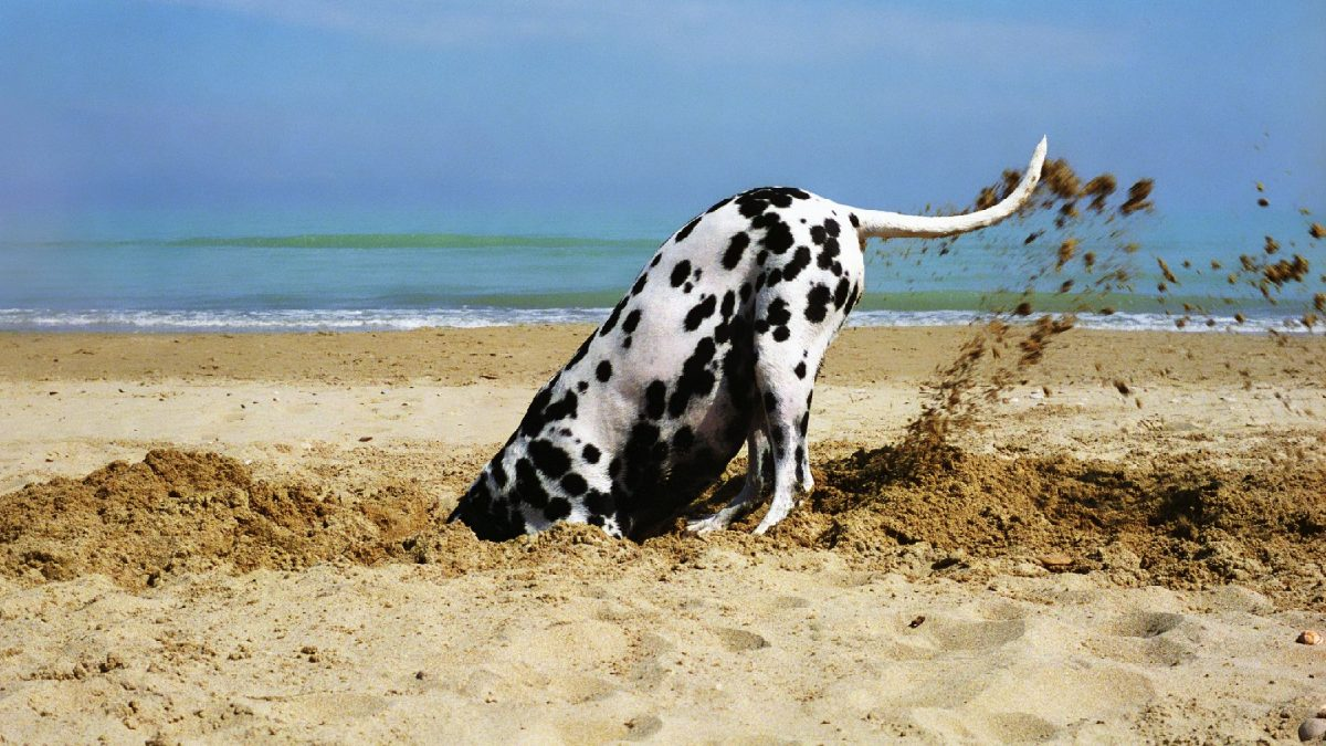 Dog Digging: Why they do it and ways to control it