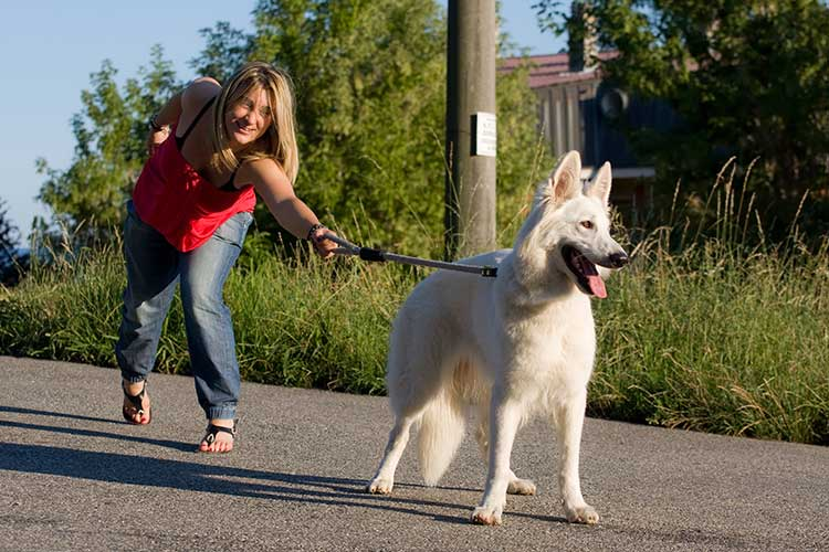 Leash Training a Dog That Pulls