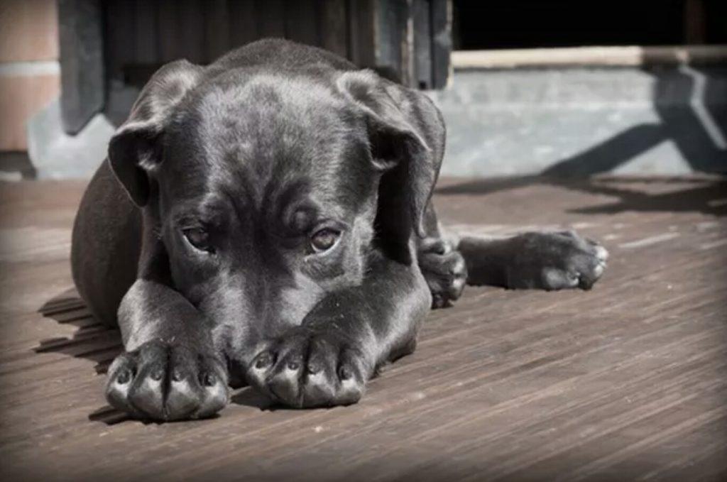 Aversive Dog Training